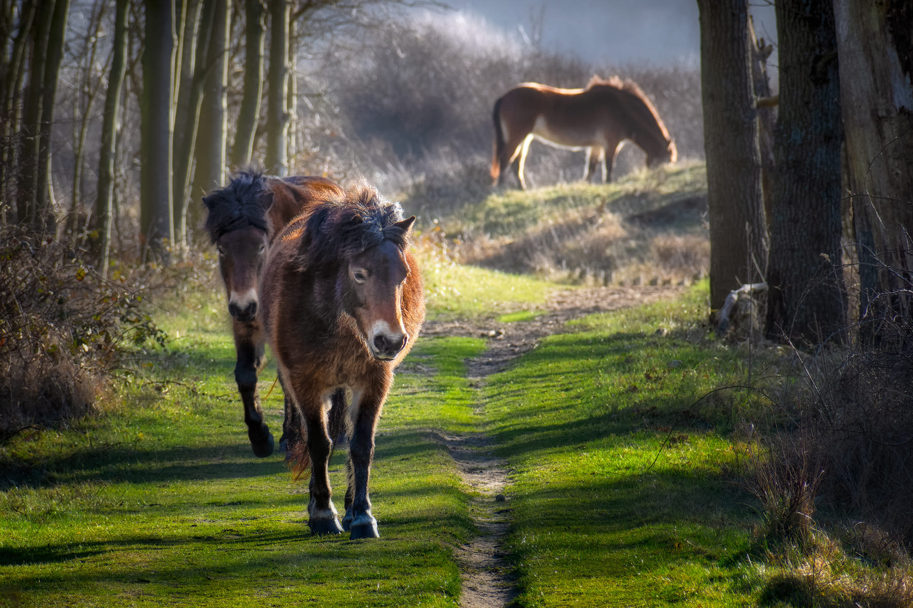 horses walking through a forest tunnel