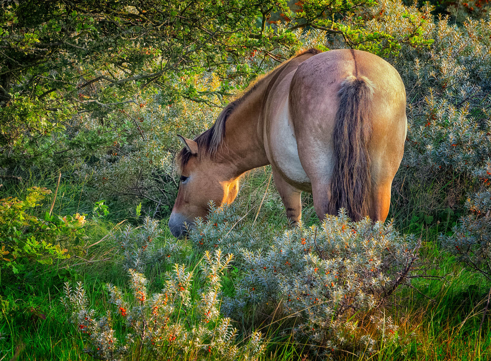 intimate grazing spot