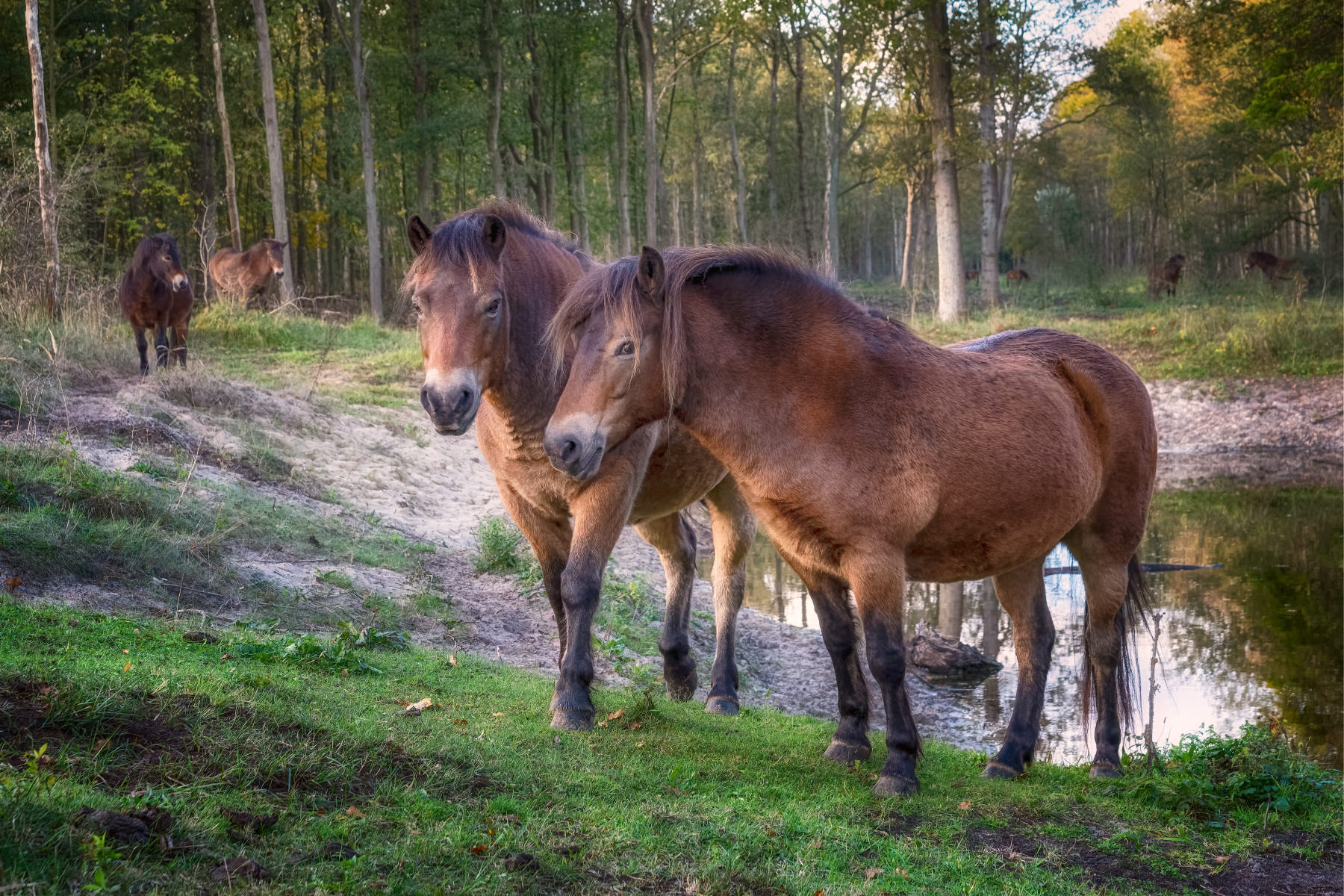 intimate portrait of horses at a pond