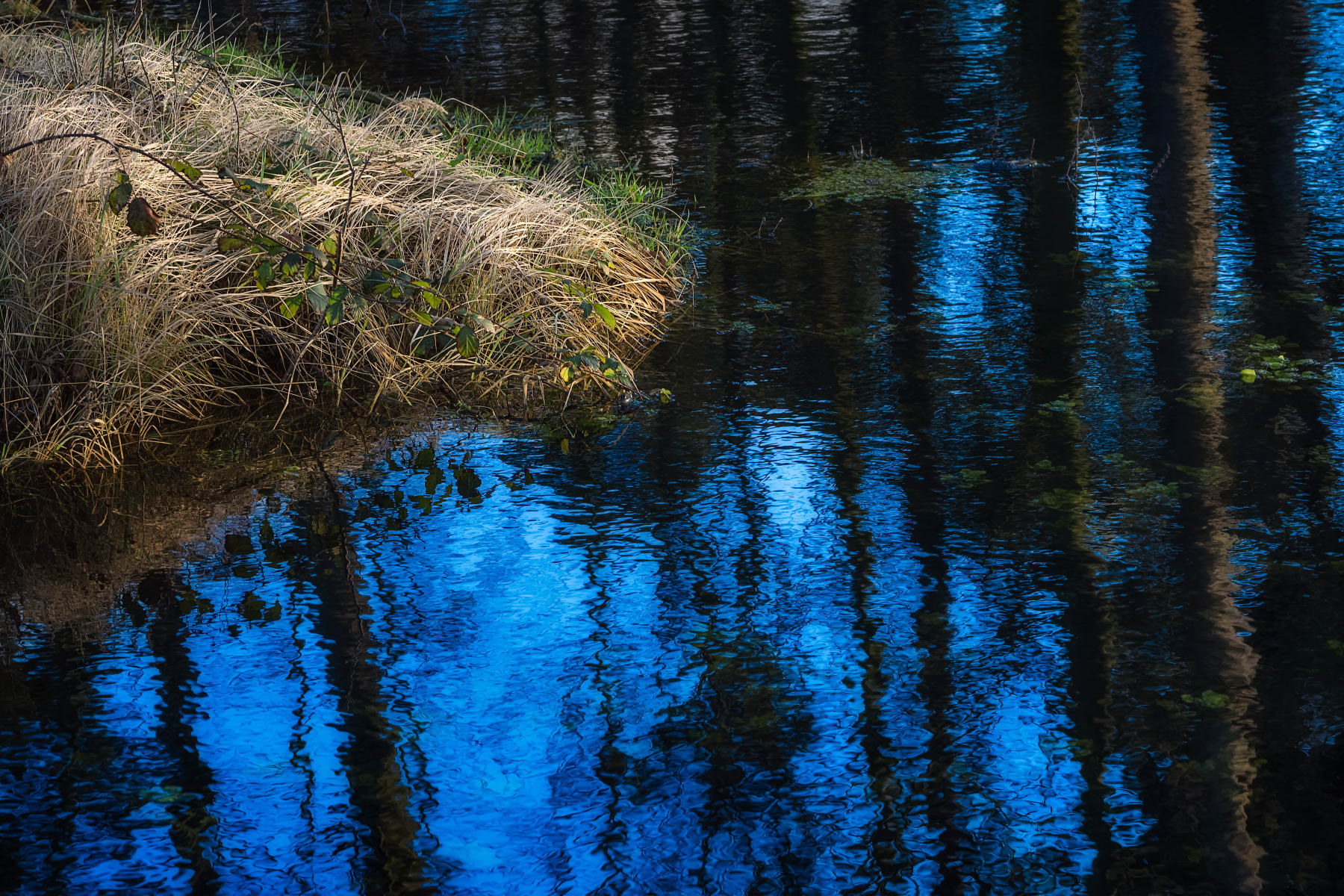 lost in blue reflections