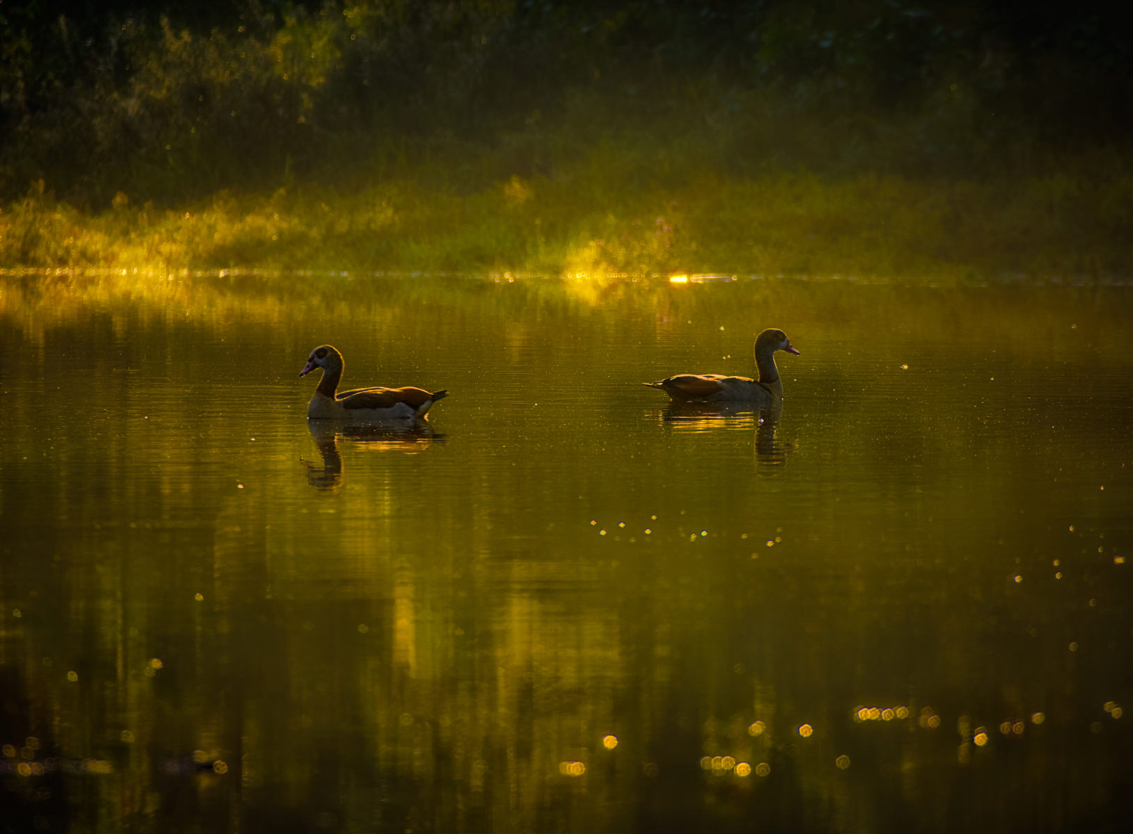 magical play of light in pond