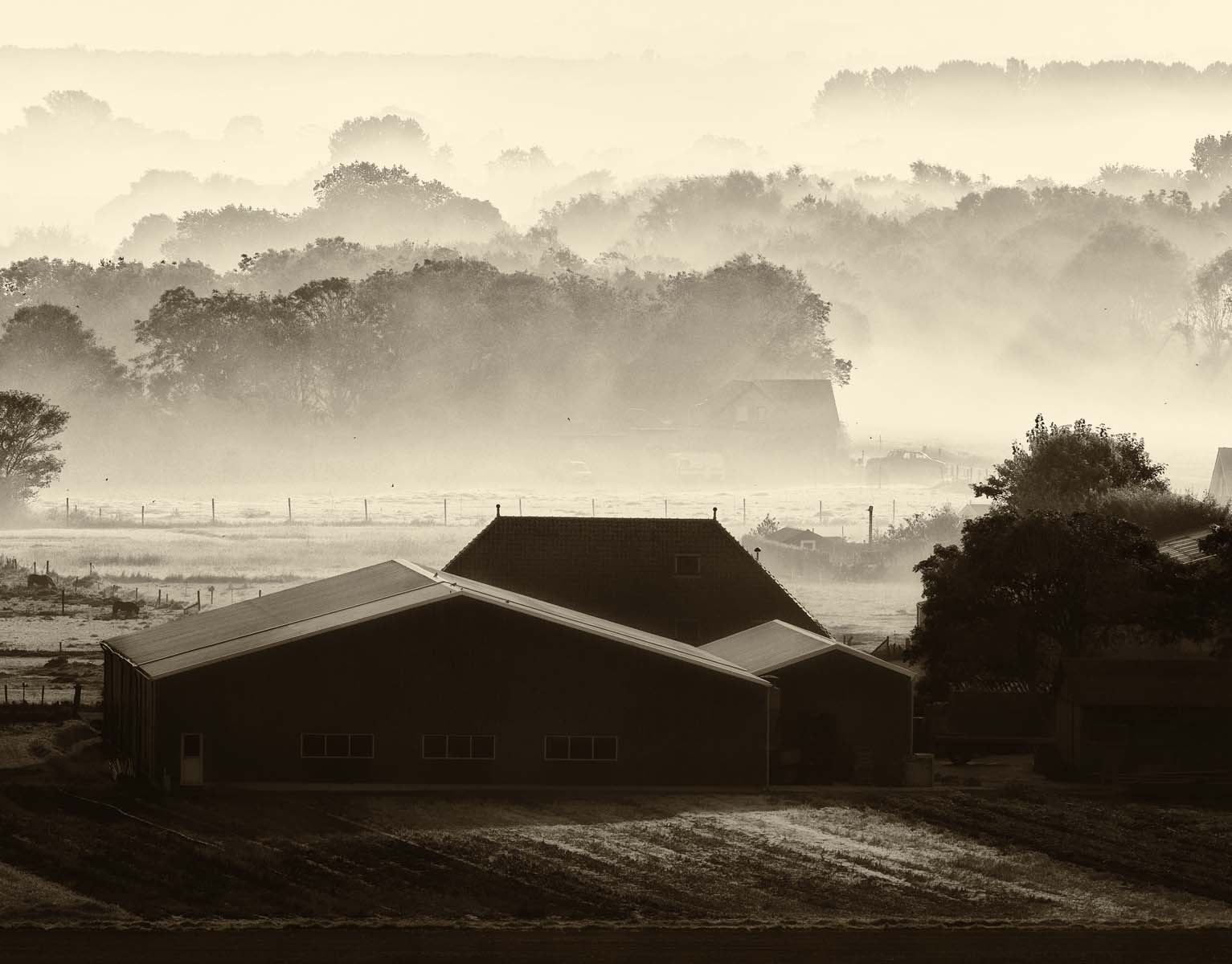 mist and morning light