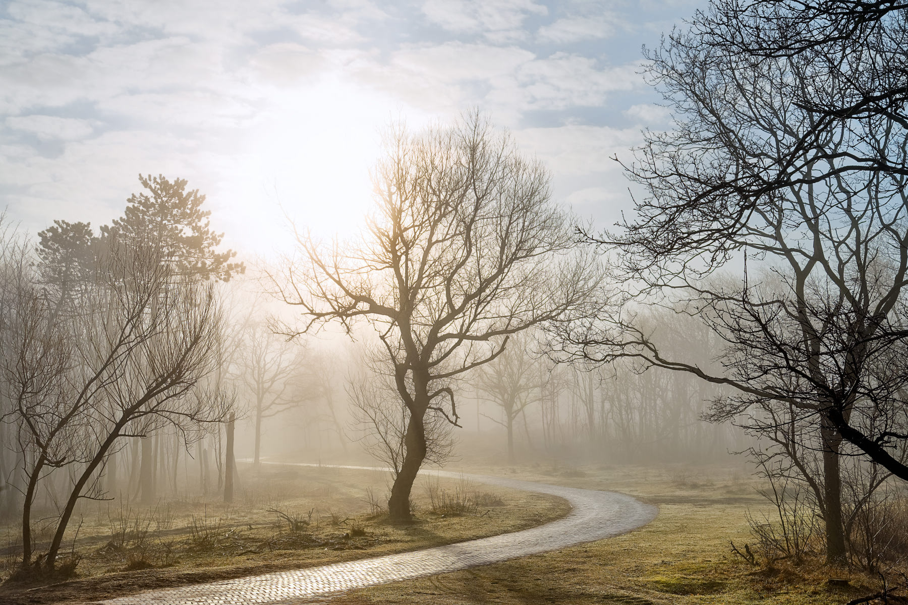 misty forest road in backlight