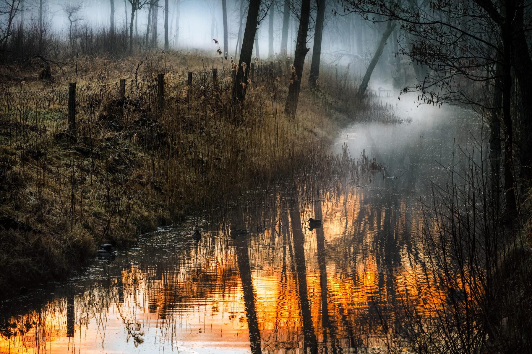 misty forest stream at dawn