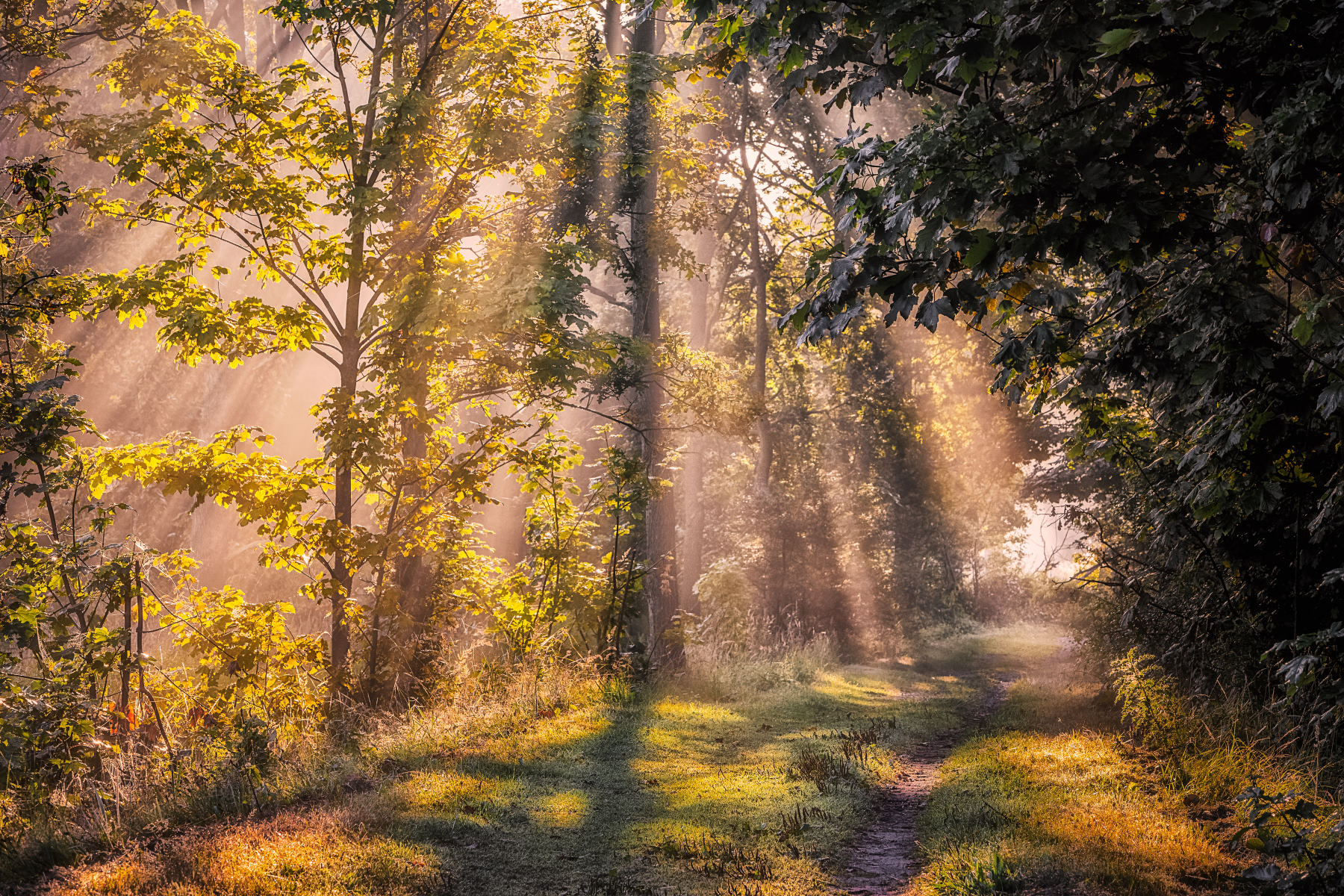 outpouring of light on forest path