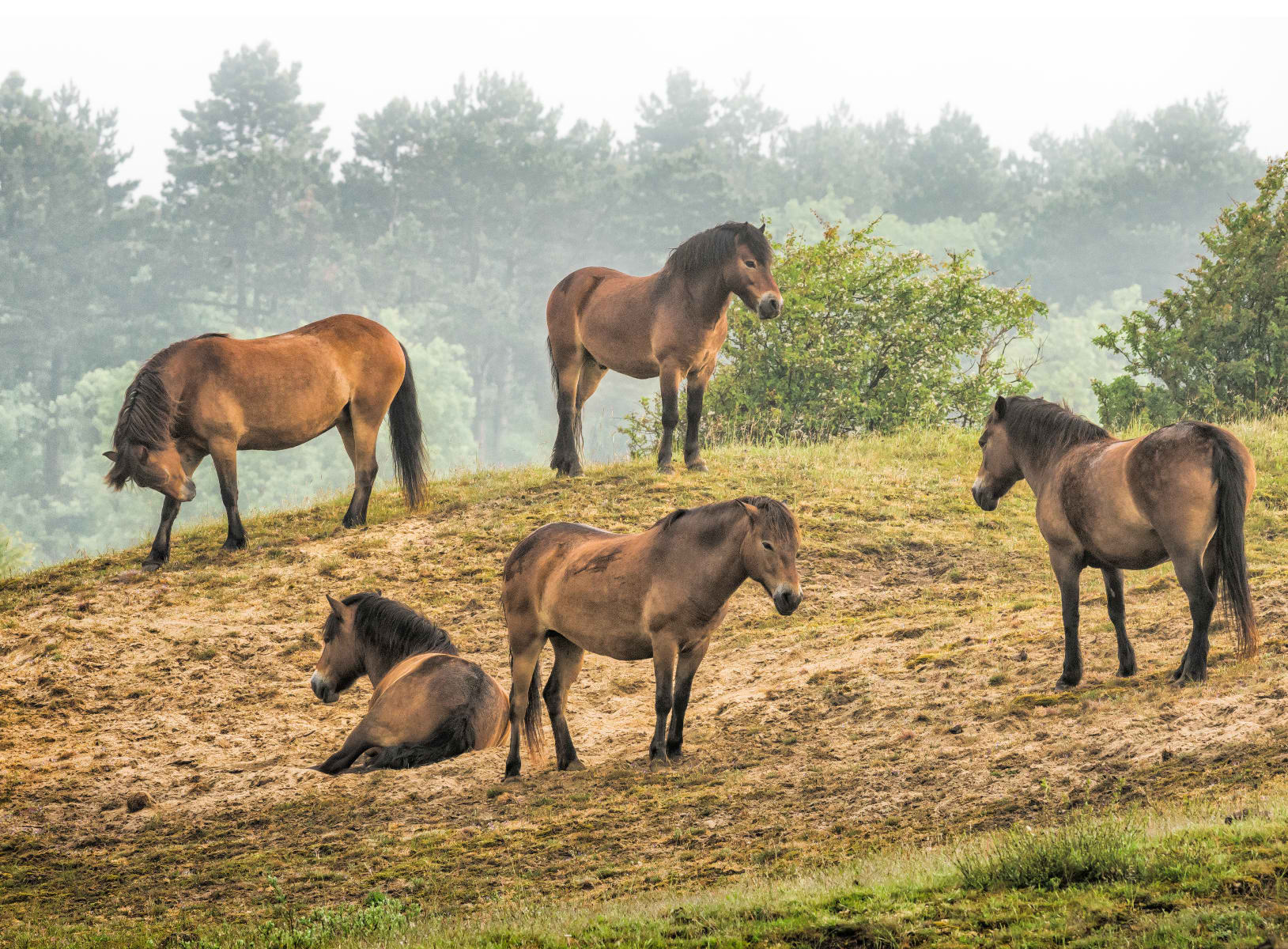 ponies on a dune top
