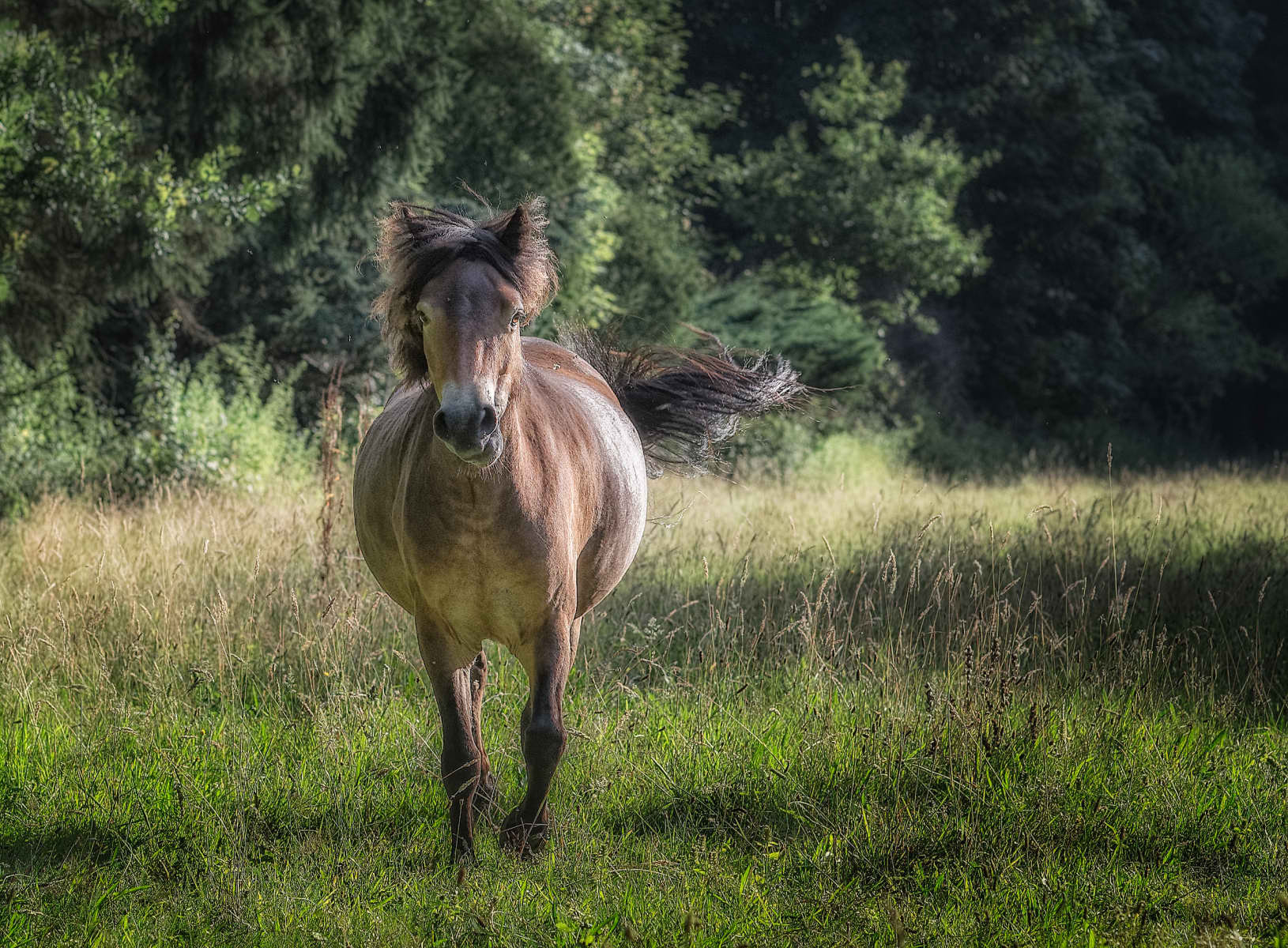pony running in a sunny meadow