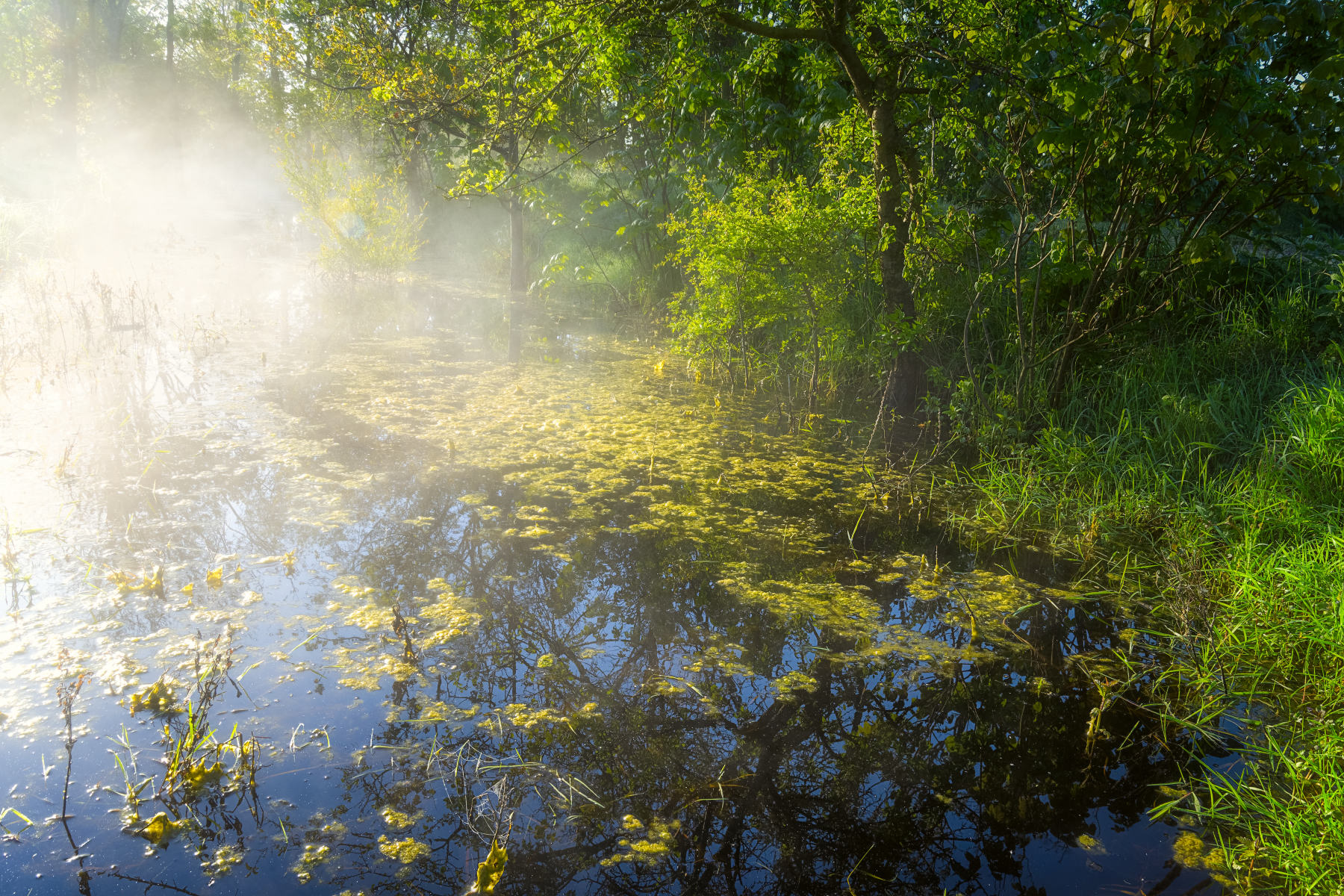steaming forest canal in early morning light