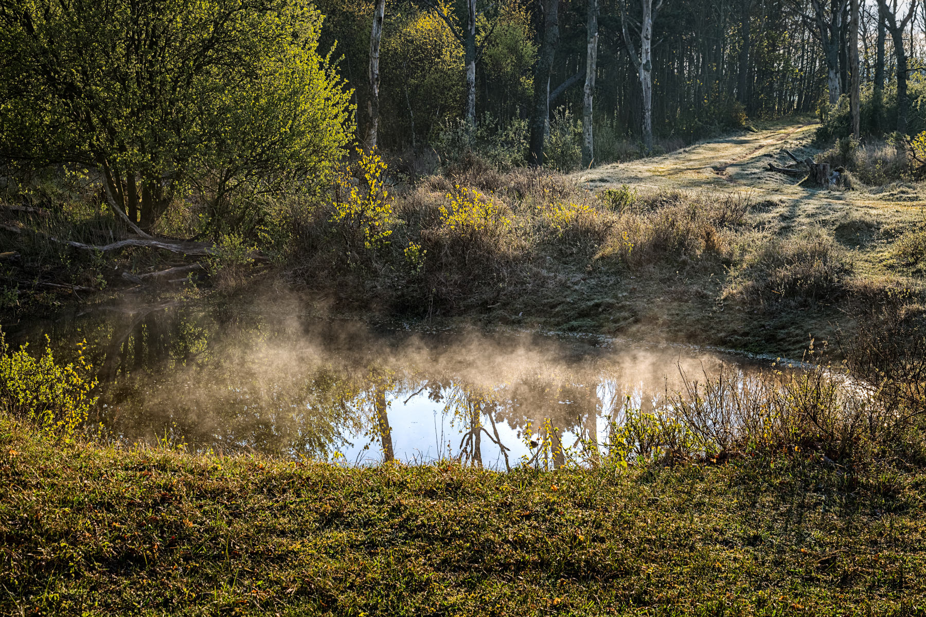 steaming pond on a cold spring morning