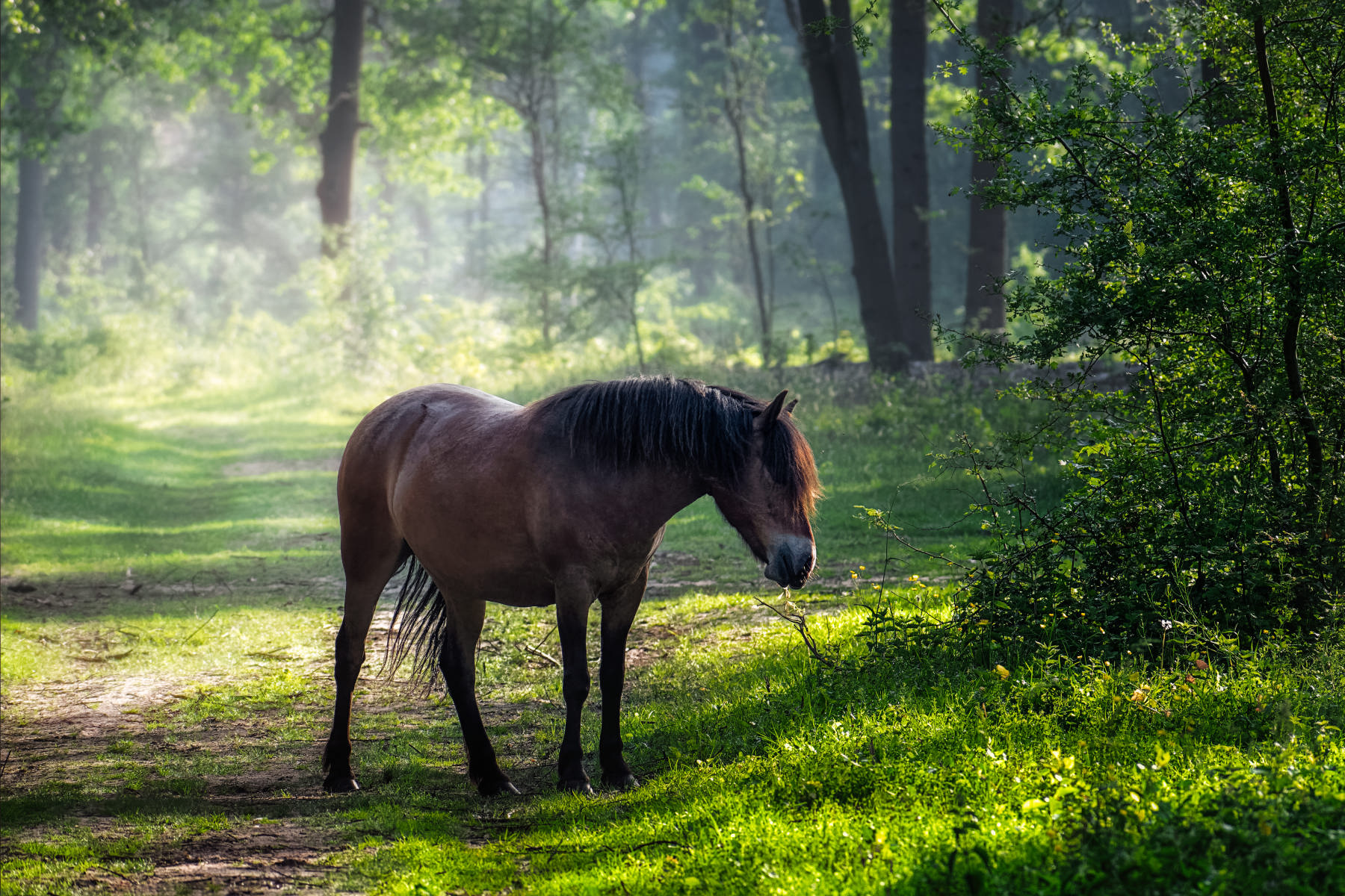 summer forest with horse