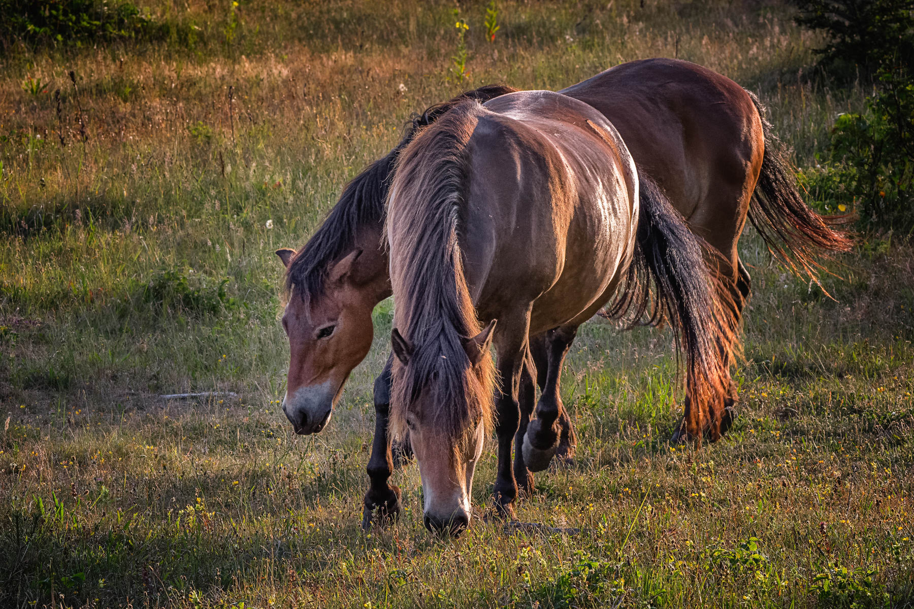 two horses approaching in backlight