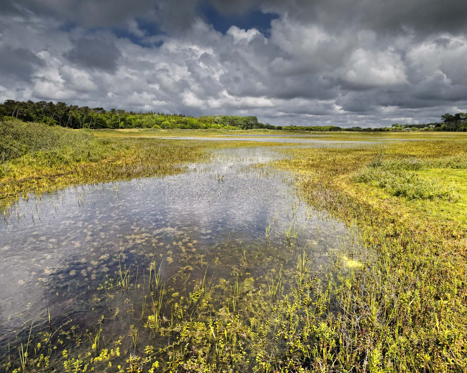wet meadow with clouds