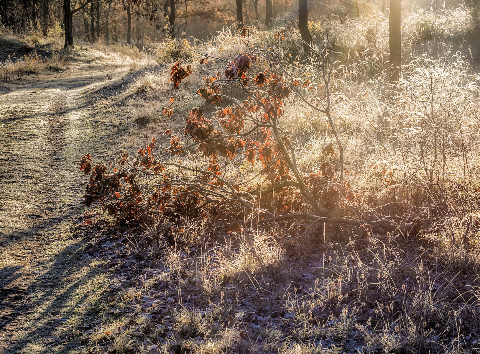 winter forest in enchanting light